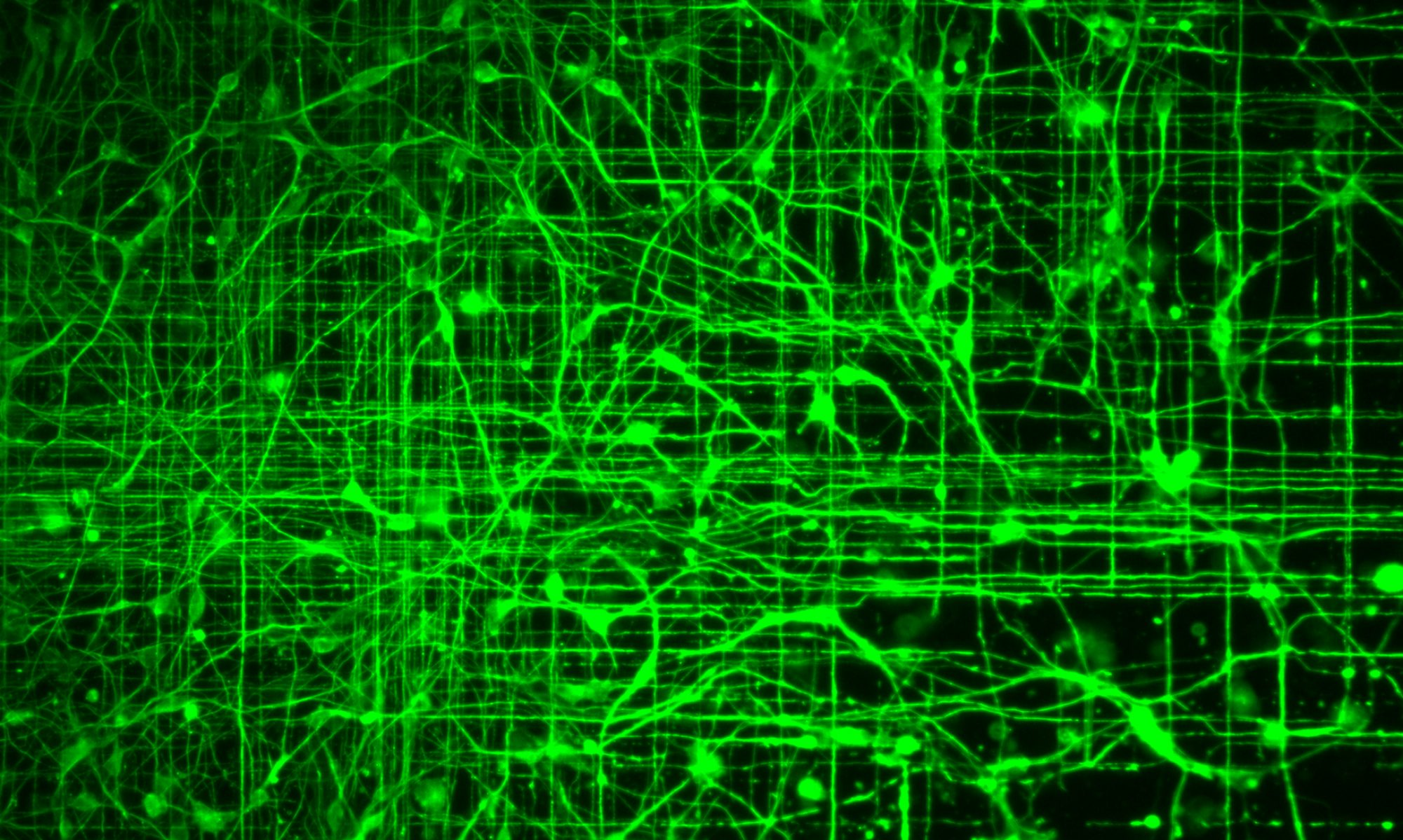 The Neural Circuits BioEngineering Group
